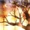 cherry-tree-of-life-ketubah