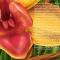 flowers-for-georgia-ketubah